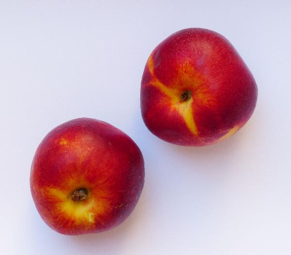 Prunus persica (L.) Batsch 'Carmina'