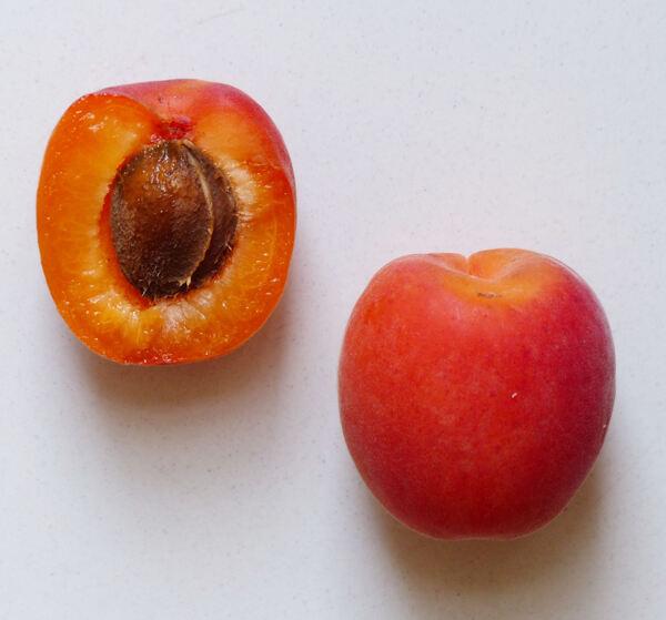 Prunus armeniaca L. 'Mikado'