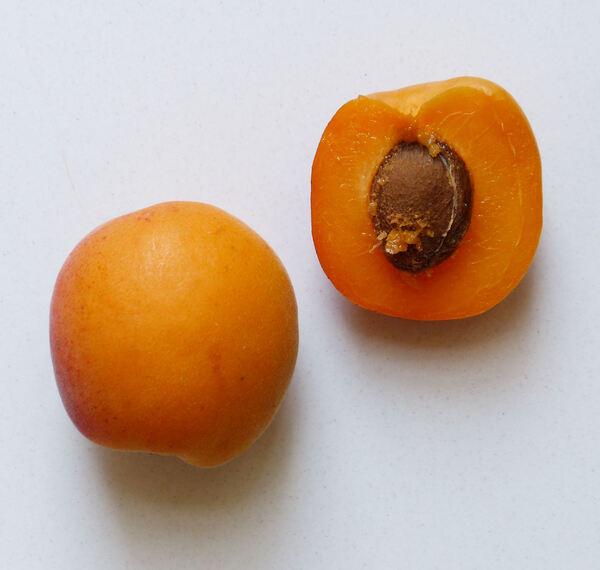 Prunus armeniaca L. 'Flopria'