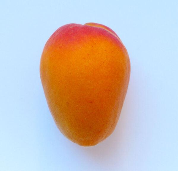 Prunus armeniaca L. 'Faralia'