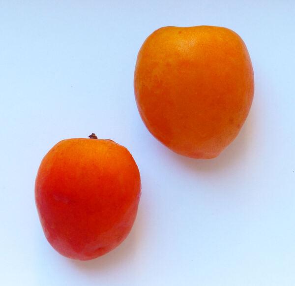 Prunus armeniaca L. 'Orange Rubis'
