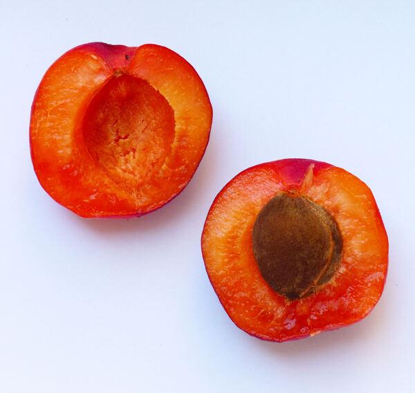 Prunus armeniaca L. 'Rubely'