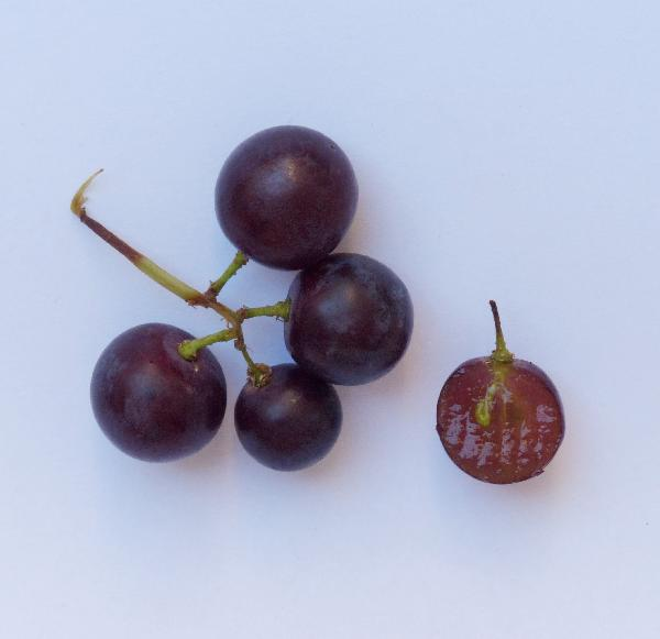 Vitis vinifera L. 'Red Flame Seedless'