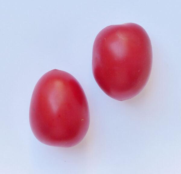 Solanum lycopersicum L. 'Pizzutello'