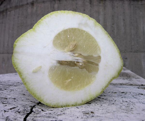 Citrus x limonimedica hort.